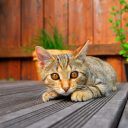 Entretenir sa terrasse en bois en 5 étapes !