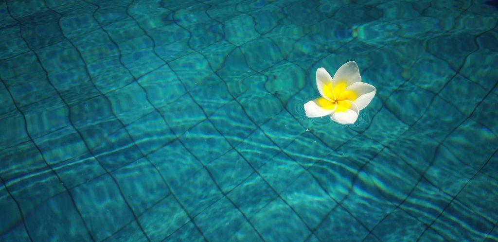 Une fleur dans une piscine